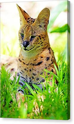 A Serval In The Grass Canvas Print
