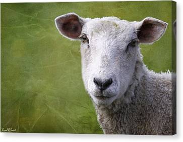 A Sheep Canvas Print by David Simons