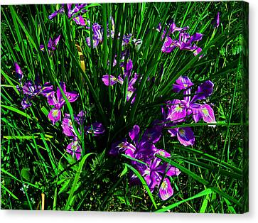 A Sign Of Spring Canvas Print by Steve Battle