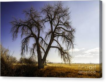 A Simple Tree Canvas Print by Kristal Kraft