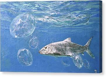 A Single Bonefish Glides Among Canvas Print by Stanley Meltzoff / Silverfish Press