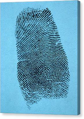 Fingertips Canvas Print - A Single Fingerprint by Vintage Images