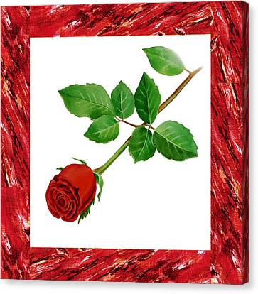 A Single Rose Burgundy Red Canvas Print by Irina Sztukowski