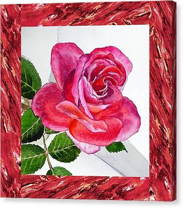 A Single Rose Juicy Pink  Canvas Print