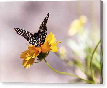 Depth Of Field Canvas Print - A Sip Of Coreopsis by Caitlyn  Grasso