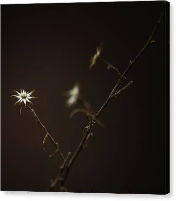 Canvas Print featuring the photograph A Sliver Of Hope by Russell Styles