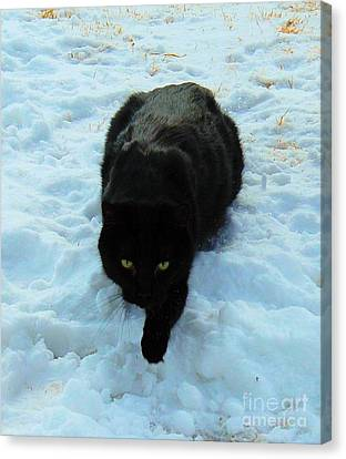 A Small Panther In The Snow Canvas Print by Cheryl Poland