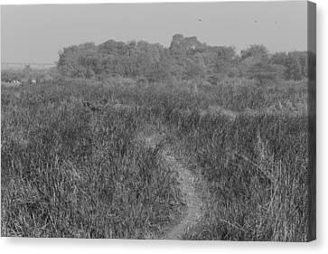 A Small Path Through Very Tall Grass Canvas Print by Ashish Agarwal
