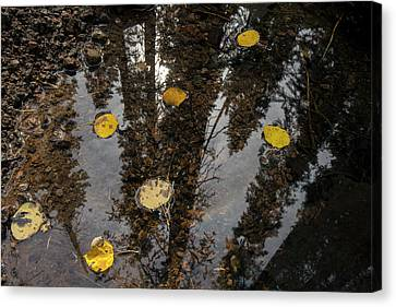 A Small Pool With Aspen Leaves Canvas Print by Bill Hatcher