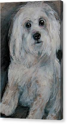 A Small White Puppy Canvas Print by Jean Cormier