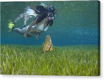 A Snorkeler With Juvenile Batfish Canvas Print by Science Photo Library