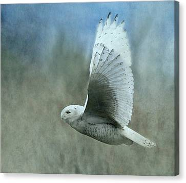 A Snowy Flight Canvas Print by Angie Vogel