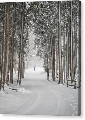 A Solitary Winter Wanderer Canvas Print by Dick Wood