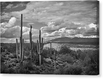 A Sonoran Winter Day In Black And White  Canvas Print by Saija  Lehtonen