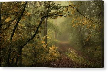 A Sorrow Beyond Dreams / Color Canvas Print by Norbert Maier