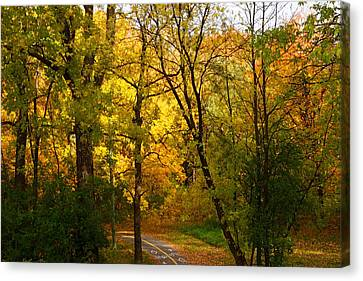 A Special Road Canvas Print by Jocelyne Choquette