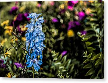 Canvas Print featuring the photograph A Splash Of Blue by Joshua Minso
