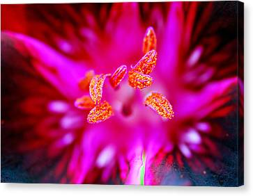 Canvas Print featuring the photograph A Splash Of Colour by Wendy Wilton