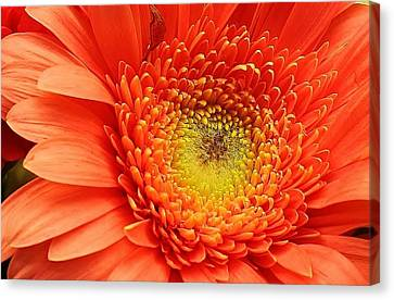 A Splash Of Happiness Canvas Print by Bruce Bley