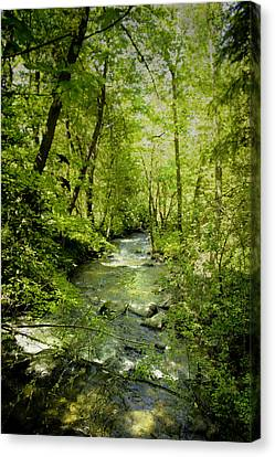 A Spring Day At Lithia Creek Canvas Print by Diane Schuster