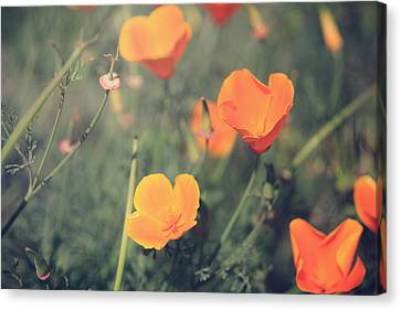 A Springtime Breeze Canvas Print by Laurie Search