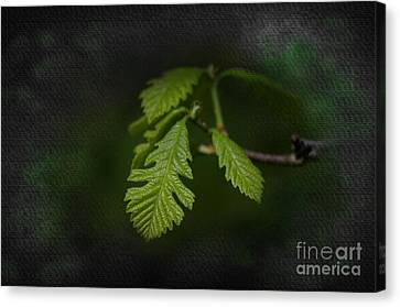 A Squirrels Ear Canvas Print by The Stone Age