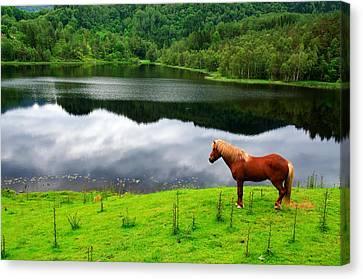 A Stallion Watching His Kingdom Canvas Print