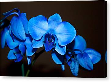 Canvas Print featuring the photograph A Stem Of Beautiful Blue Orchids by Sherry Hallemeier