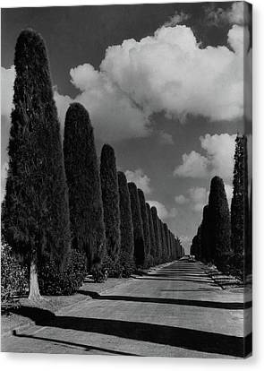 Lawson Canvas Print - A Street Lined With Cypress Trees by John Kabel
