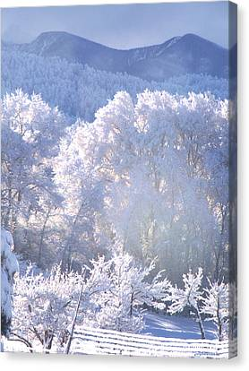 A Study In Frosty Hues Of Winter Whites And Blues Canvas Print by Anastasia Savage Ealy