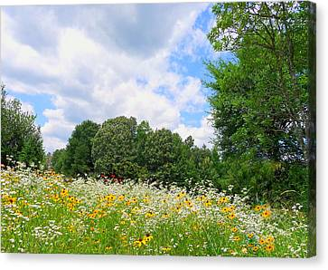 Canvas Print featuring the photograph A Summer Meadow by Jim Whalen