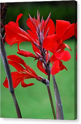 A Summer Red Flower Canvas Print by Nancy Stutes