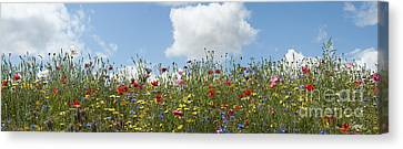 A Summers Day Canvas Print by Tim Gainey