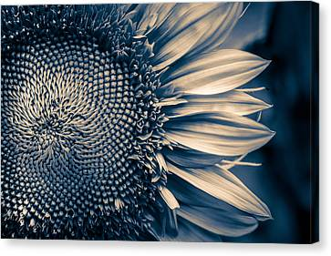 A Sunflower Dream Canvas Print by Isabel Laurent