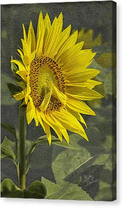 Canvas Print featuring the photograph A Sunflower's Prayer by Betty Denise