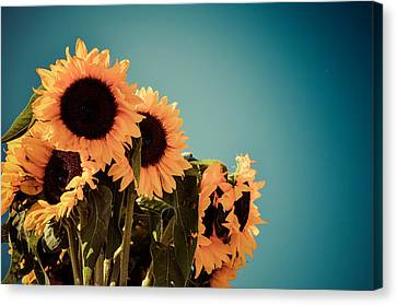 A Sunny Bunch Canvas Print