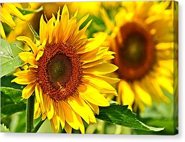 A Sunny Day Canvas Print by Mike Martin