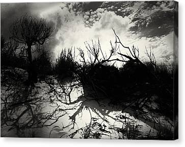 A Symphony Of Light And Shadows Canvas Print by Gerlinde Keating - Galleria GK Keating Associates Inc