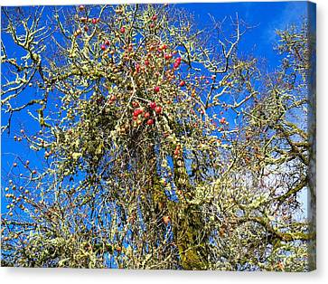 A Tangle Of Apple And Oak Canvas Print by Steve Battle