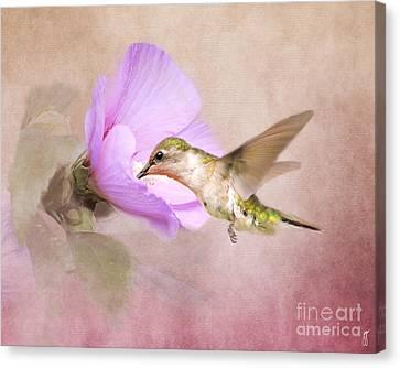 A Taste Of Nectar Canvas Print