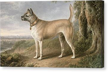A Terrier On A Path In A Wooded Landscape Canvas Print by Charles Towne