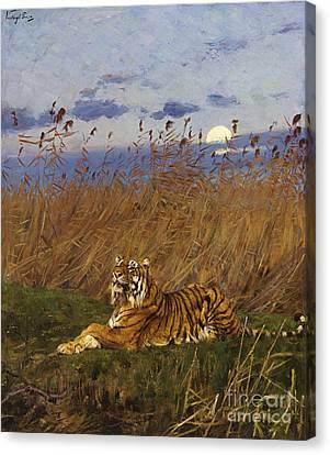 A Tiger In The Moonlight Canvas Print by Pg Reproductions