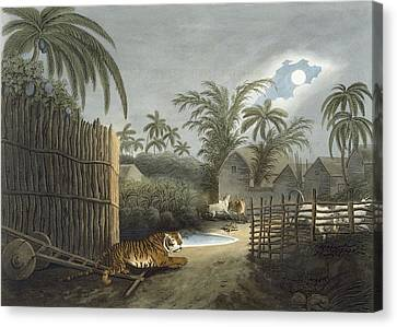 Cottages Canvas Print - A Tiger Prowling Through A Village by Samuel Howett