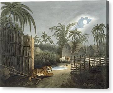 A Tiger Prowling Through A Village Canvas Print by Samuel Howett