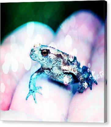 A Tiny Frog Canvas Print