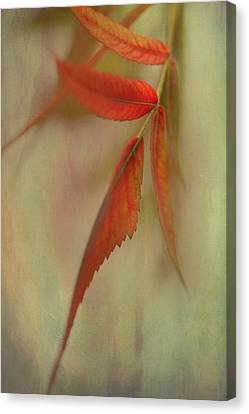 Canvas Print featuring the photograph A Touch Of Autumn by Annie Snel
