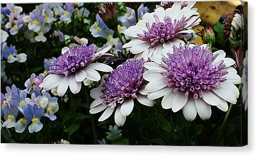 A Touch Of Color Canvas Print by Bruce Bley