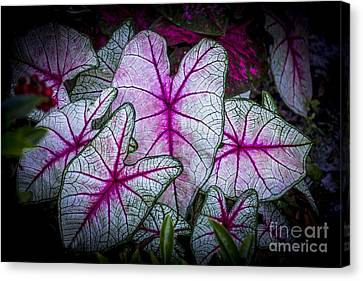 A Touch Of Red Canvas Print by Marvin Spates