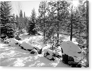A Touch Of Snow - Black And White Canvas Print by Carol Groenen