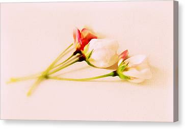 A Touch Of Spring Canvas Print by Jessica Jenney